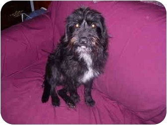Terrier (Unknown Type, Medium) Mix Dog for adoption in Wauseon, Ohio - Archie