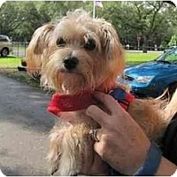 Adopt A Pet :: Bradley - West Palm Beach, FL
