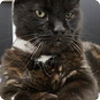 Adopt A Pet :: Sebastian - Vancouver, BC