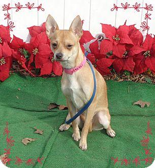 Chihuahua Mix Dog for adoption in Marietta, Georgia - GIGI