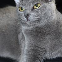 Adopt A Pet :: Talia - New Castle, DE