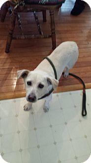Dachshund Mix Dog for adoption in Coeburn, Virginia - MISSY