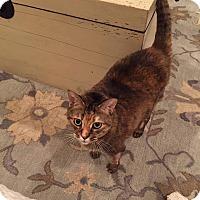 Adopt A Pet :: Daisy - Monroe, NC