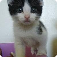 Adopt A Pet :: Jax - Evans, WV