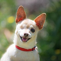 Adopt A Pet :: A-Twinky - San Diego, CA