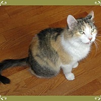 Adopt A Pet :: Camilla - Mt. Prospect, IL