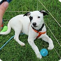 Adopt A Pet :: Gunther - Rochester, MN