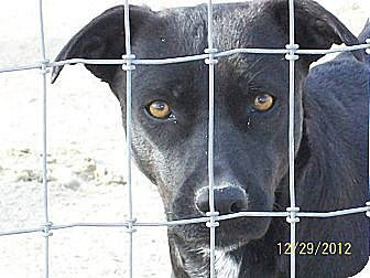 Terrier (Unknown Type, Medium)/Labrador Retriever Mix Dog for adoption in Mexia, Texas - Pearl