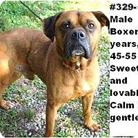 Adopt A Pet :: # 329-11 - ADOPTED! - Zanesville, OH