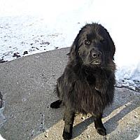 Adopt A Pet :: Nessie - West Bloomfield, MI