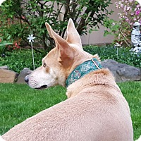 Adopt A Pet :: MAY - Middlesex, NJ