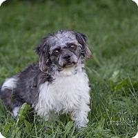 Adopt A Pet :: Wilbur - Drumbo, ON