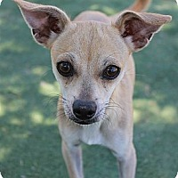 Adopt A Pet :: Juliet - Buckeye, AZ
