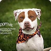 Adopt A Pet :: Crash - ADOPTED! - Zanesville, OH