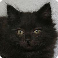 Adopt A Pet :: Challenger - Republic, WA
