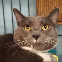 Adopt A Pet :: Rupert - Eugene, OR