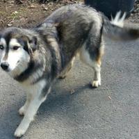 Adopt A Pet :: Annabelle - Andover, MA