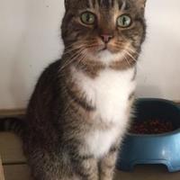Adopt A Pet :: Coal - Ravenel, SC