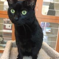 Adopt A Pet :: Schwartz - Rochester, MN