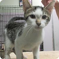 Adopt A Pet :: Kane - Reeds Spring, MO