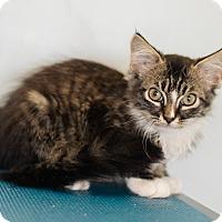 Adopt A Pet :: Henry $75 - Seneca, SC