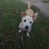 Adopt A Pet :: Yuki - LONG ISLAND CITY, NY