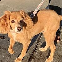 Adopt A Pet :: Baby - Santa Barbara, CA