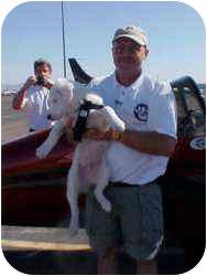 Australian Shepherd Mix Puppy for adoption in Mesa, Arizona - Baron