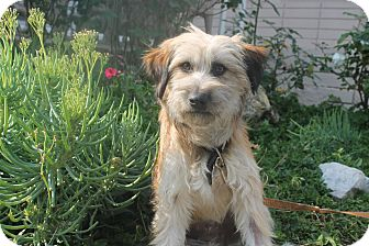 Terrier (Unknown Type, Small) Mix Dog for adoption in Los Angeles, California - Peaches