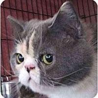 Adopt A Pet :: Miko - Davis, CA