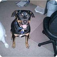Adopt A Pet :: Otto - Scottsdale, AZ