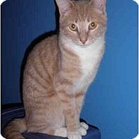 Adopt A Pet :: Maddox - Warren, MI