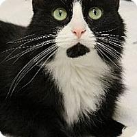 Adopt A Pet :: Tulla - Chicago, IL