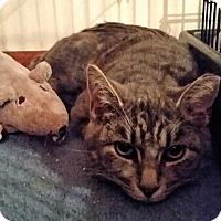 Adopt A Pet :: Lenny - Newburgh, NY