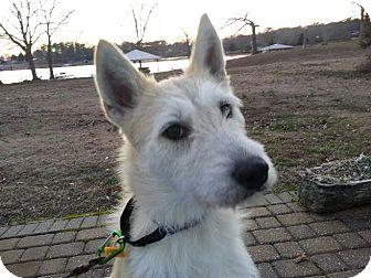 Terrier (Unknown Type, Medium) Mix Dog for adoption in Minneapolis, Minnesota - Olivia