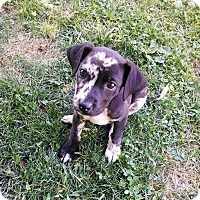Adopt A Pet :: Patches - Winchester, VA