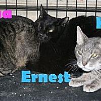 Adopt A Pet :: Dana - East Stroudsburg, PA