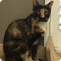 Adopt A Pet :: Thea - Tampa, FL