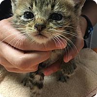 Adopt A Pet :: Posh - Duluth, MN