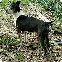 Adopt A Pet :: Patrick - Emory, TX