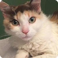 Adopt A Pet :: Lilly - Albany, NY