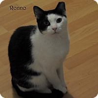 Adopt A Pet :: Ronno - Pearland, TX