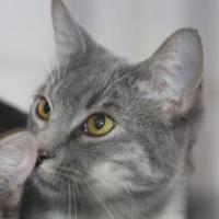 Adopt A Pet :: Leonidas - Covington, LA