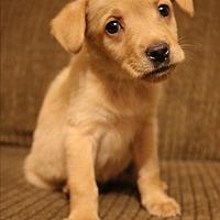 Adopt A Pet :: Lyra - Hagerstown, MD