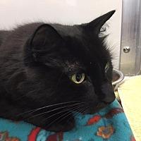 Adopt A Pet :: BoBo - St. Charles, MO