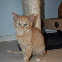 Adopt A Pet :: Miss Kitty - Brainardsville, NY