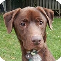 Adopt A Pet :: Tyson - Lewisville, IN