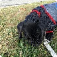 Adopt A Pet :: Mister Max - Marlton, NJ