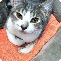 Adopt A Pet :: Piper - Byron Center, MI