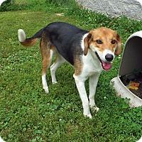Adopt A Pet :: Lucy - Franklin, KY